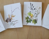 Botanical Art Cards, Series 08 - Seasons