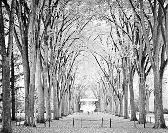 Vintage PSU Photograph football 60s joepa october original black white Dad elm trees leaves gift - Fall on the mall, Penn State  c. 1966