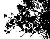 Abstract Black and White Photography Print