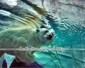 Swimming Polar Bear underwater photograph