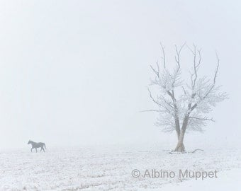 Horse Photography, Quiet Morning in the Frost and Fog 8x10 print, wall art