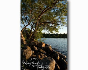 Tree Photography Rocks Lake Water Beach Decor Manitoba Canada Green Blue Brown  Wall Decor Tree, Home Staging Accent