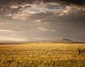 Golden Fields Western Photograph, Color Landscape Photography