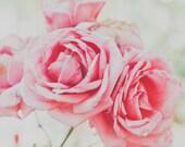 Pink Roses Print, Flower Photography, Botanical Print, Romantic Home Decor, Shabby Chic, Feminine, Pastel Summer Decor - Petals of Romance