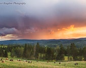 Summer Storm at Sunset with Cows Grazing Print
