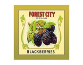 Small Journal - Forest City Blackberries - Fruit Crate Art Print Cover