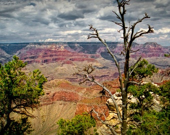 Grand Canyon South Rim Panorama perspective with barren tree and cloudy sky at the National Park in Arizona No.19924 A Landscape Photograph