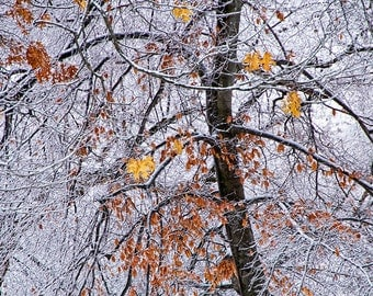 Winter Snowfall and Tree Trunk with Fall Leaves at Garfield Park Grand Rapids Michigan No. 1016 Nature Color Fine Art Photography