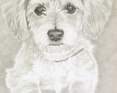 Dog Custom Pencil Portrait