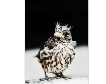 Bird photography, baby bird, nursery art decor, 8x10 fine art print