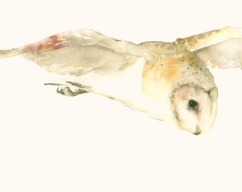 Barn Owl in Flight Fine Art Print from Original Watercolor
