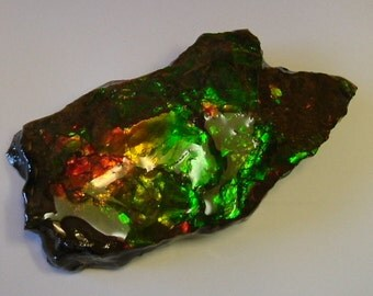 Very Large Gem Quality Ammolite from Utah Deposit, Display Piece, Green, Red, Orange, Yellow and Gold Color 065