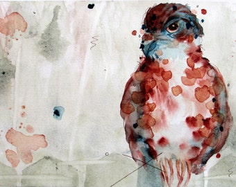 Archival Art Print of Watercolor Hawk, Bird of Prey, Nature, Wildlife, Bird Art, 10 x 8 Print