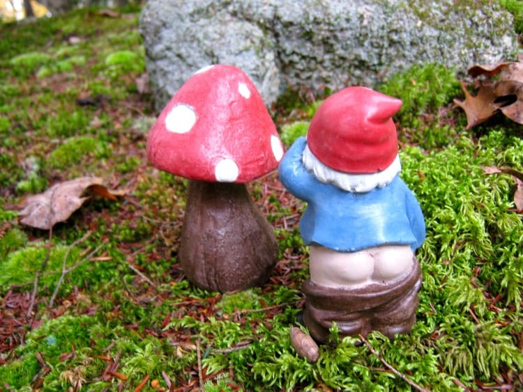 Gnome Garden: Gnome And Toadstool Concrete Statues Fairy By