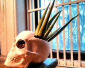 Sale Now 40 WAS 85 XL Skull Planter