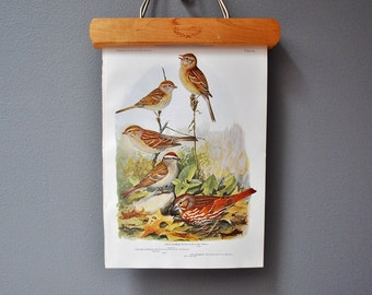 Vintage Bird Book Plate - Woodland Decor - Sparrows