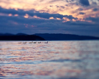 8x10 Geese photograph, nature photography, sunset, Orcas Island