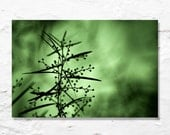 green nature photograph fine art photo silhouette abstract dark moody jade green