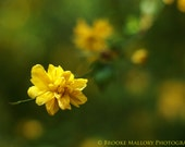 Fine Art Print: Yellow Spring Flower