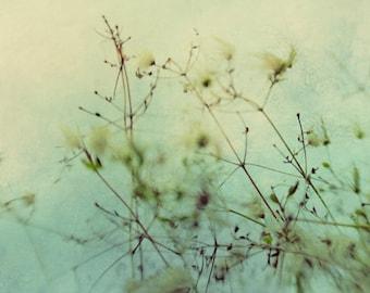 abstract art, nature art print, botanical print, teal and white art, aqua home decor, winter decor, aqua nursery decor, milkweed