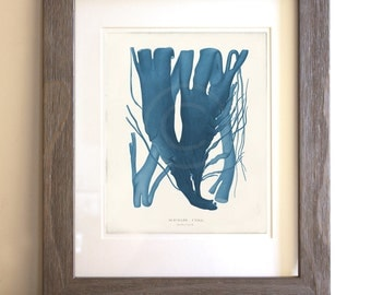 Antique Blue Seaweed Art Print - 8 x 10 - Natural History