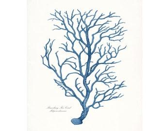 Coastal Decor Sea Coral Branch Coral Giclee Art Print 8x10 Coastal Blue