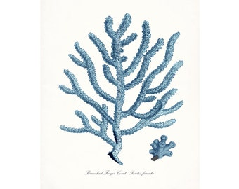 Coastal Decor Sea Coral Branched Finger Coral Giclee Art Print 8x10 Coastal Blue