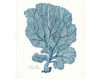 Coastal Decor Sea Coral Venus Sea Fan Giclee Art Print 8x10  Coastal Blue