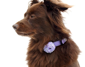 Rosalicious Leather Dog Collar - Violet Femme