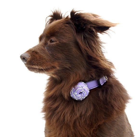 Rosalicious Leather Dog Collar - Violet Femme