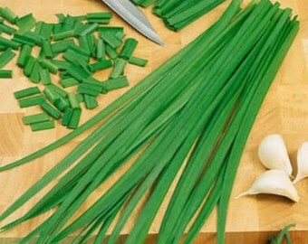 100 Summer Chive Seeds-1254