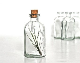 Air Plant in a Glass Bottle with Cork, Airplant Glass Jar Terrarium, Apothecary Bottle Terrarium, Glass Corked Bottle Decor, Jar Decoration