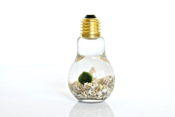 SALE!! Underwater Marimo Moss Ball in Light Bulb Shaped Vase, Sea Shell Home Decor Sea Shell Decor, Nature Gift, Green Gift, Unique Plant