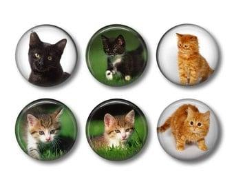 Kitten pinback button badges or fridge magnets