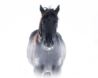 Black horse in white fog photography print - spooky goth style photograph home wall decor - office wall art - rustic decoration - gothic