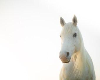 White horse photography print. White horse home decor wall art for children nursery room, kids bedroom, wild horse photograph, horse photo