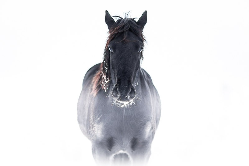 Black Horse In White Fog Photography Print Spooky Goth Style