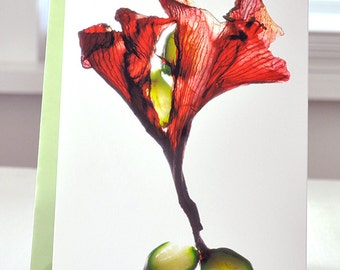 "Artist Floral Note Card--Amaryllis Dance--Size 5""x7"""