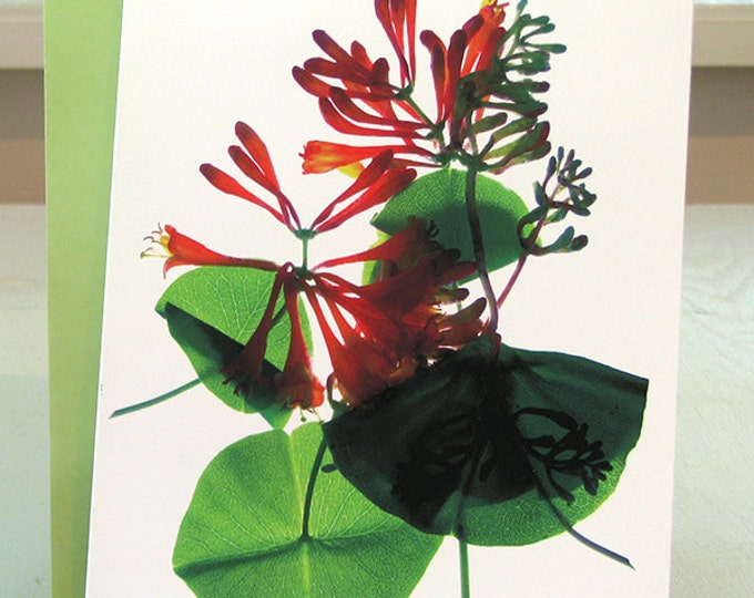 Artist Floral Note Card--Honeysuckle--Thank You Celebration Wedding Thinking of You
