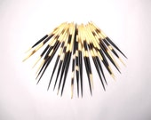 """Multipack 4""""-6"""" DRILLED UNCUT Porcupine Quills Needles Beads for quillwork, art projects, costumes,etc"""