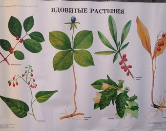 Botanical School Poster - Common Poisonous Plants