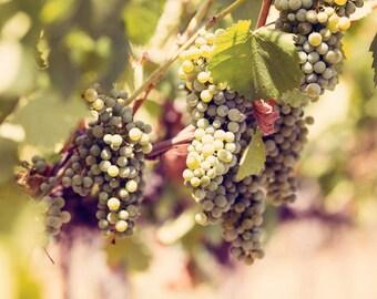 Food Photography - Kitchen Art - Wine - Wine Grapes - Dining Room Decor - Vineyard - Fine Art Photography Prints - Green Tan Gold Home Decor