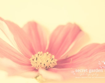 flower cosmos photo print - whimsical fine Art nature photography, wall art, pastel, pink, floral, stilllife,