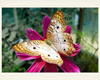 White Peacock Butterfly on Hot Pink Flower handmade photo note card