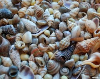 Tiny Sea Shells, Ocean, Shells, Beach