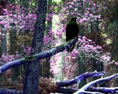MYSTICAL RAVEN FOREST Surreal Fantasy Photo Twilight Art Print Pink Lavender Purple Black Raven Crow Trees Colorful Forest Choose Size