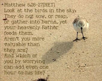 Do not worry - Beach Bird Scripture Art - Matthew 6:26-27 8x10 photo