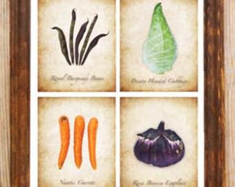 Vintage Garden Vegetables Botanical Print Carrot Beans Cabbage Eggplant 8x10 Art Picture