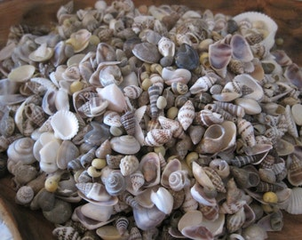 Etsy your place to buy and sell all things handmade for Tiny shells for crafts