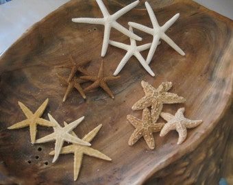 Mini Starfish Collection (12 PC) - Mini White Starfish - Sugar  - Tan - Florida - Natural Seashells - Starfish - Coastal- Seashell Supply